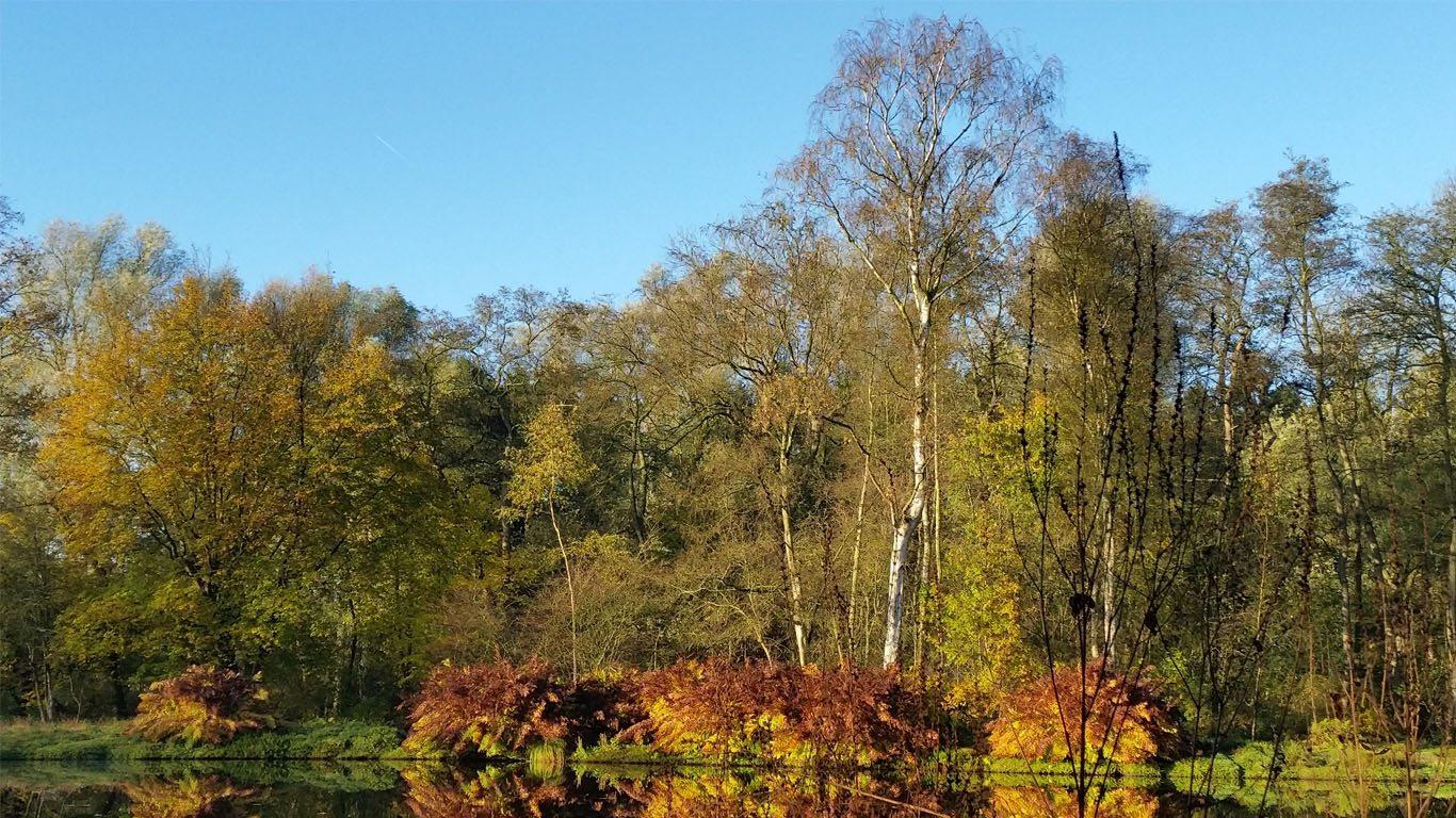 Veenbespad in de herfst