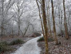 heidepad_thijssepark_winterbeeld