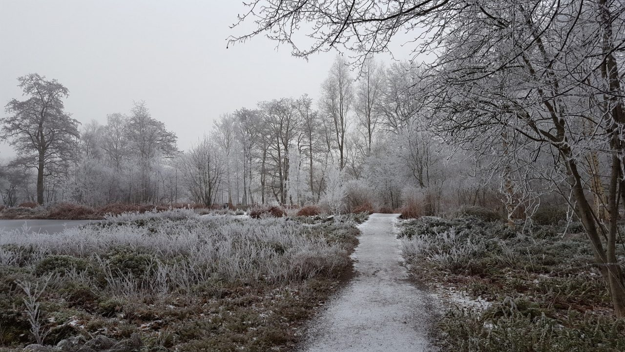 veenbespad_thijssepark
