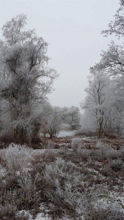 winter_thijssepark